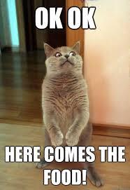 Meme Food - ok ok here comes the food cat meme cat planet cat planet
