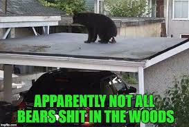 Funny Bear Memes - memes what s happening