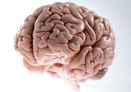 Scumbag Brain Meme Generator - blank scumbag brain blank template imgflip