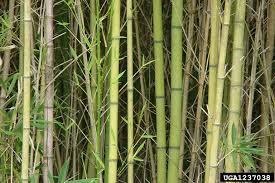 usda native plants photos sffp