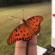 meaning of orange butterfly steemit
