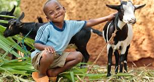 heifer international last chance alternative gift giving opportunity with heifer