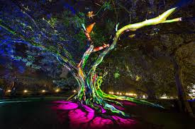 Sydney Botanic Gardens Sydney 360 Royale Botanic Garden Lighting Tree 2016