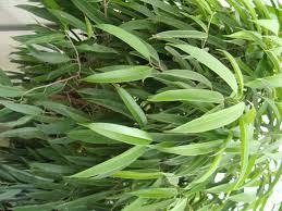 tropical foliage plants u2013 savingourboys info