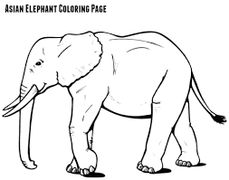 african elephant colouring pages coloring stock vector template