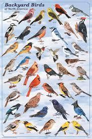 Nc Backyard Birds Best 25 Bird Identification Ideas On Pinterest Identification