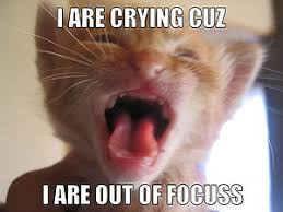 Lol Cat Meme - lolcat wikipedia