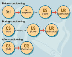 pavlov u0027s classical conditioning u2013 teacherlibrariansassociation
