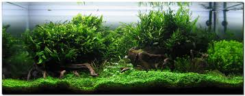 Aquascaping Techniques Aquascape Of The Month August 2009
