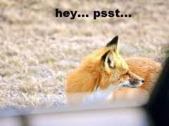 What Did The Fox Say Meme - what does the fox say meme weknowmemes