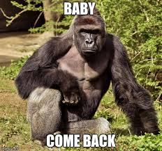 Baby Come Back Meme - 25 please baby come back memes for desperate people in love