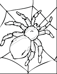 spider coloring pages online tarantula page halloween to print
