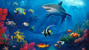 33bbdd color wallpapers life underwater aquarium moving fish