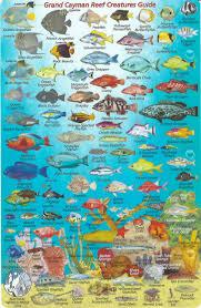 Grand Cayman Islands Map Grand Cayman Island Dive Map U0026 Reef Creatures Guide Waterproof