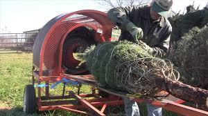 starr pines christmas tree farm youtube