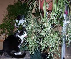 cats love house plants it u0027s easy to add a few plants for your