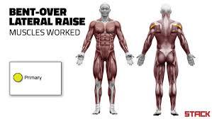 decline bench press muscles bench bench press muscles worked flat dumbbell bench press muscles