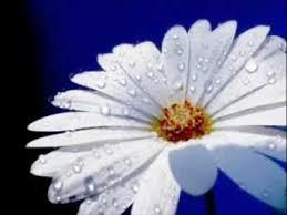 найкраща квітка фото