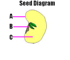 the structure and function of plants proprofs quiz