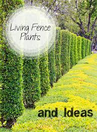 Home And Yard Design App Living Fence Plants And Ideas Living Fence Yard Design And