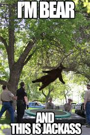 Funny Bear Meme - best of the falling bear meme smosh