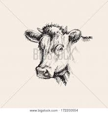 cow images illustrations vectors cow stock photos u0026 images