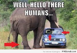 Elephant Meme - 31 horny elephant meme pmslweb