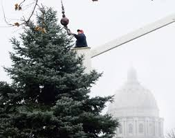 christmas tree sought for governor u0027s lawn central mo breaking news