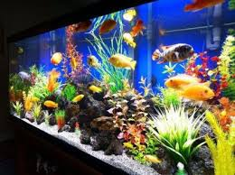 50 Best DIY Aquarium Decorations Ideas meowlogy