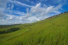 Teh Kayu Aro kebun teh kayu aro jambi kebun teh terindah di indonesia jambi
