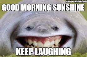 Meme Good Morning - good morning sunshine meme happy wishes