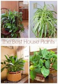 best 25 common house plants ideas on pinterest house plant care