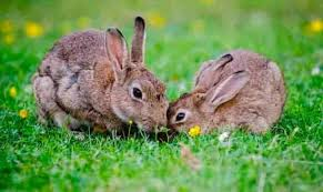 Rabbit Repellent For Gardens by How To Get Rid Of Rabbits Both In Winter And In Summer 7 Proven