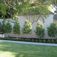 Tree Ideas For Backyard Great Backyard Trees Landscaping Ideas Dig The Clear Separation Of