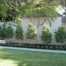 elegant backyard trees landscaping ideas tropical front yard