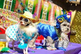 mardi gras dog dogs dressed for mardi gras