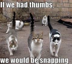 Cats Memes - image top 30 funny cat memes 14 funny cats memes jpg animal