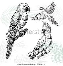 tropic parrot stock images royalty free images u0026 vectors