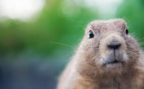 whistle pigs weather channel happy groundhog