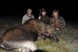 moose trophy hunt belarus bookyourhunt com
