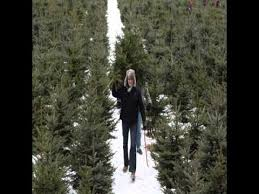 Natural Christmas Tree For Sale - fresh christmas trees for sale youtube