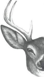 drawn buck stag head pencil and in color drawn buck stag head