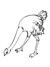 free printable ostrich coloring pages kids