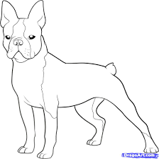 coloring download boston terrier coloring pages boston terrier