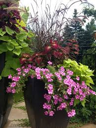 Shrubs For Patio Pots Flowers For Pots Adorable With Patio Flowers On Pinterest Elephant
