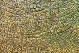 dinosaur skin images u0026 stock pictures royalty free dinosaur skin
