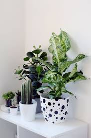 large indoor plant pots love these tall plant stands green indoor