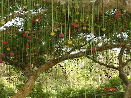 parkia pendula arbol espectacular colombia árboles maderables
