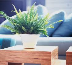 Wooden Material Element 10 Feng Shui Ways To Decorate With Wood Element