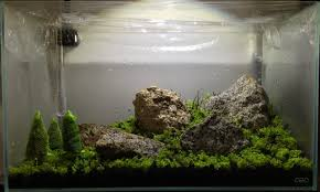 completely new ada 60p the planted tank forum